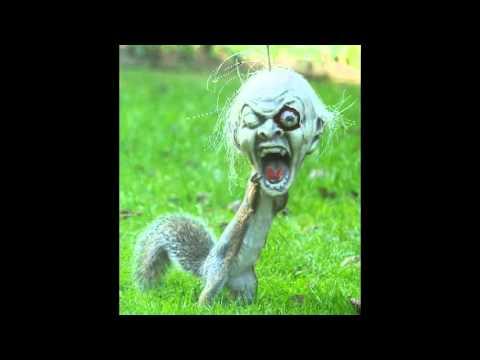 Halloween Squirrel Says Hi Youtube