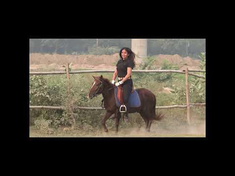 Cruel horse riding ladies 'Cruel and