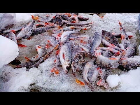 Рыбалка в ГЛУХОЗИМЬЕ в СИБИРИ, но РЫБУ МЫ НАШЛИ | Река Чулым