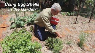 Using Egg Shells in the Vegetable Garden