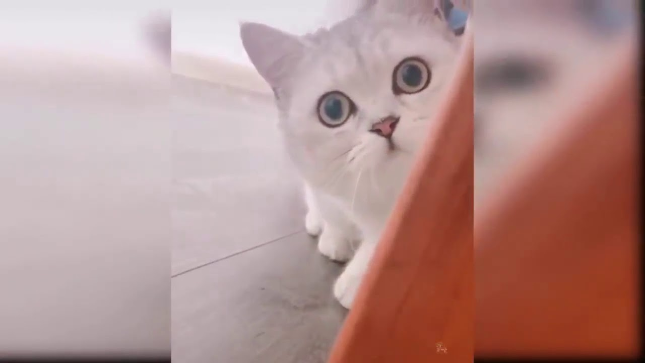 Video Anjing2 Lucu