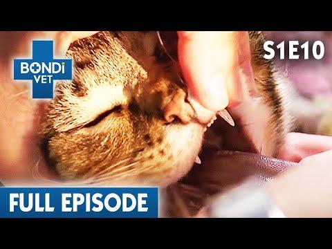 🐱 Cat Eats Human Medicine Accidentally | FULL EPISODE | S01E10 | Bondi Vet
