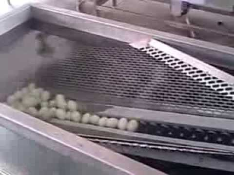 Egg Washing Machine/Egg Cleaning Machine