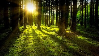 15 Minute Nature Sound Meditation - Forest, Clearing, Wetland.