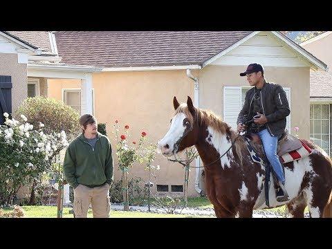Horse Prank