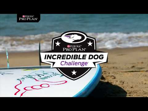 Dog Surfing Competition - Purina Pro Plan Incredible Dog Challenge