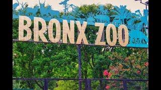 Bronx Zoo Complete Tour New York #bronxzoo