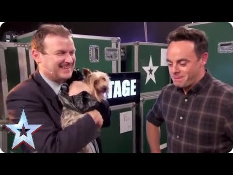 MAX THE DOG CHASES BGT PRESENTER! | Britain's Got Talent
