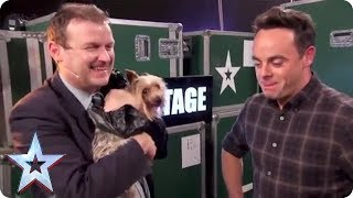 MAX THE DOG CHASES BGT PRESENTER! | Britain's Got Talent thumbnail
