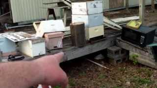 Palmer Creek Hive Removal & Bee Vac Design