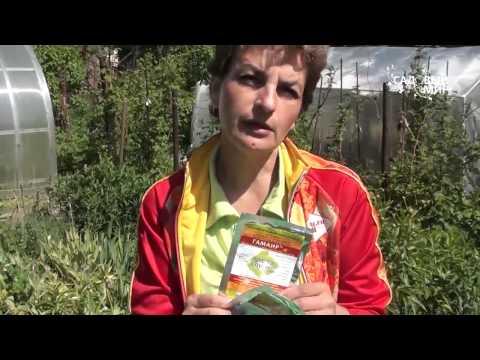 Биологические препараты для защиты растений от вредителей и болезней