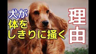 チャンネル登録を御願いします☆→http://ur0.pw/Gf0q 今回は、愛犬が自分...
