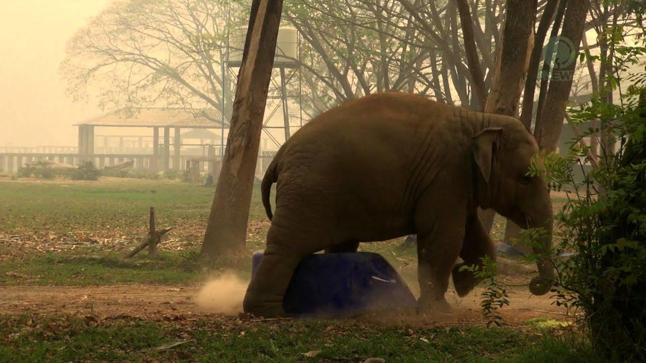 Baby Elephant Navann Show Time Youtube