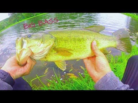 fishing GOLF COURSE ponds for BIG BASS!!! (pond hopping)