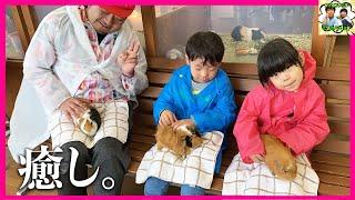 【おでかけVlog】 えにいとが大好きなカドリードミニオンへ いってきました♥ 前回はいけなかったけど、 はじめてふれあい動物園へ♥ モルモットを抱っこして癒されまくる家族で ...