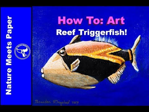 Reef Triggerfish - 3:10.5 - Nature Meets Paper