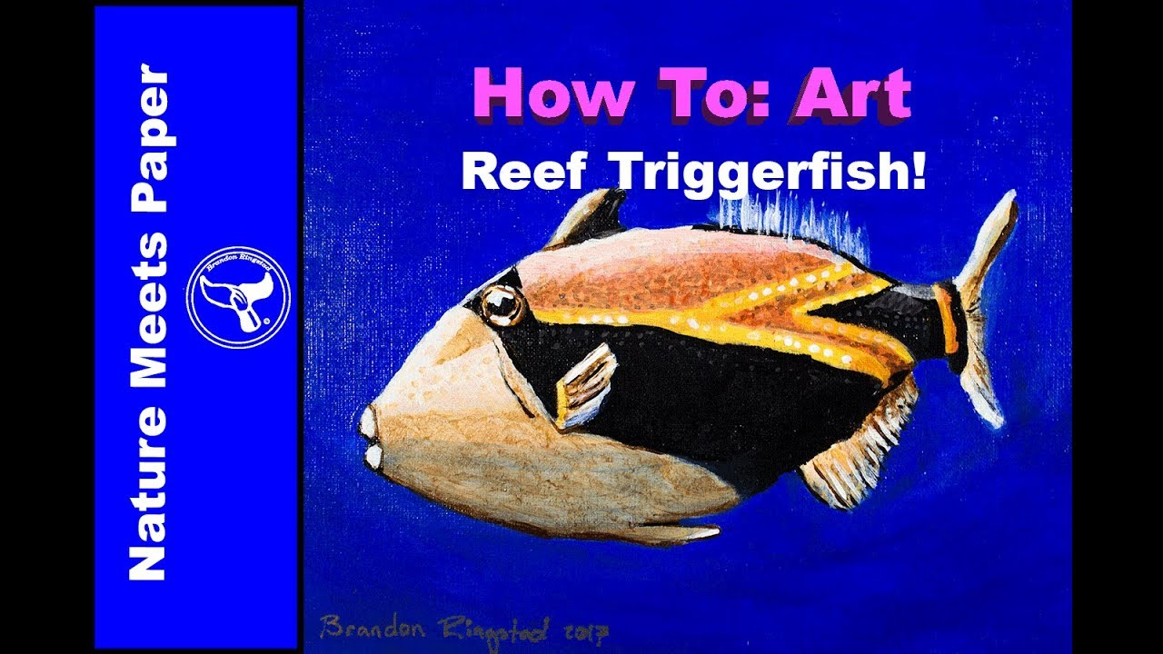 reef triggerfish 3 10 5 nature meets paper youtube