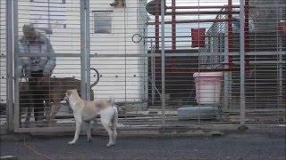 Дрессировка собак в Новосибирске. ЦЕНТР СОДЕРЖАНИЯ И ВОСПИТАНИЯ ЖИВОТНЫХ