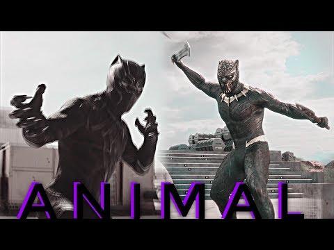 Black Panther // Animal
