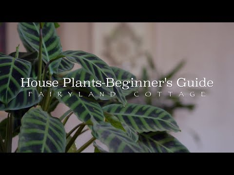 House Plants - Beginners Guide - Simple Living