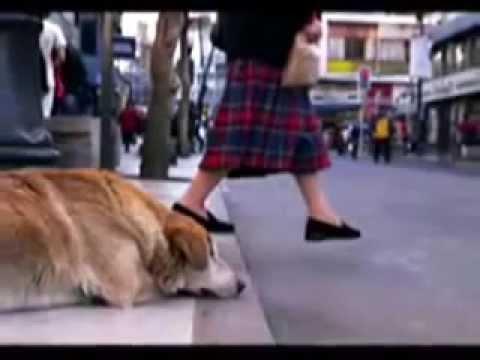 El diario de un perro 2015 (Oficial)