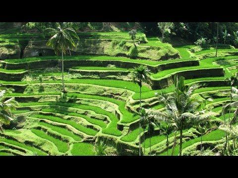 Best Ubud Hotels: YOUR Top 10 Best Hotels In Ubud Bali