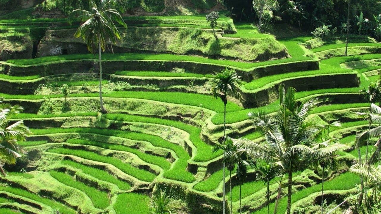 Best Ubud Hotels Your Top 10 In Bali
