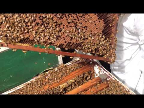 Basic Bee hive follow through, Australian Conditions, Queensland.