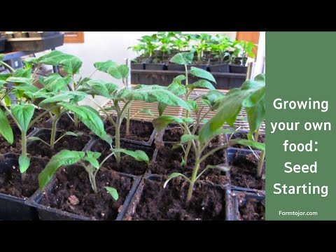 How to Grow Your Own Food - Seed Starting Tutorial