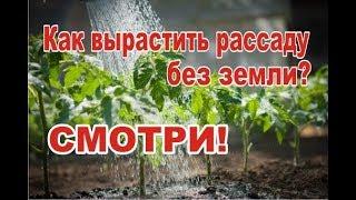 Как посадить семена томатов на рассаду