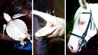 Oldukça Nadir Görülen 23 Albino Hayvan