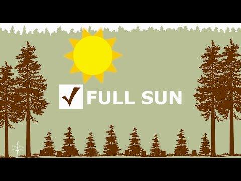 Clearcutting in Oregon - Forest Fact Break