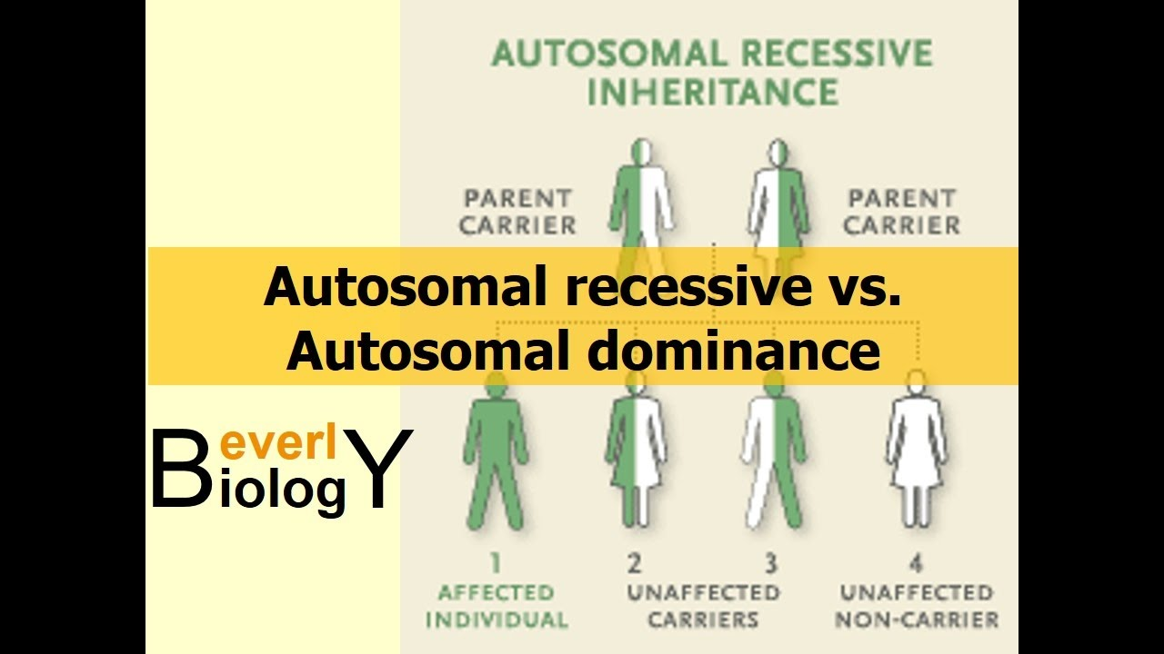 Autosomal Recessive Vs Autosomal Dominance - Youtube-7681