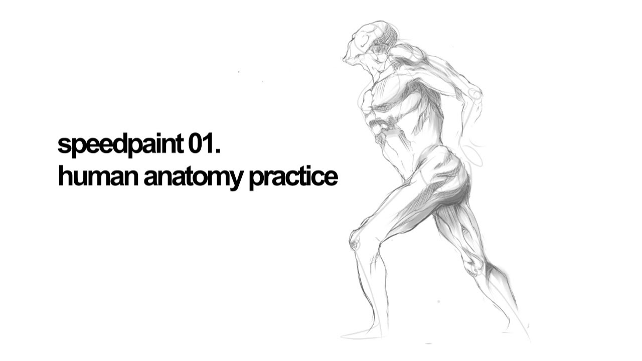 Speedpaint 01 Human Anatomy Practice Youtube