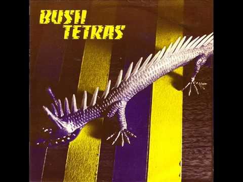 Image result for bush tetras