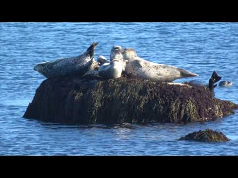 Discovering the Nature of Cape Ann