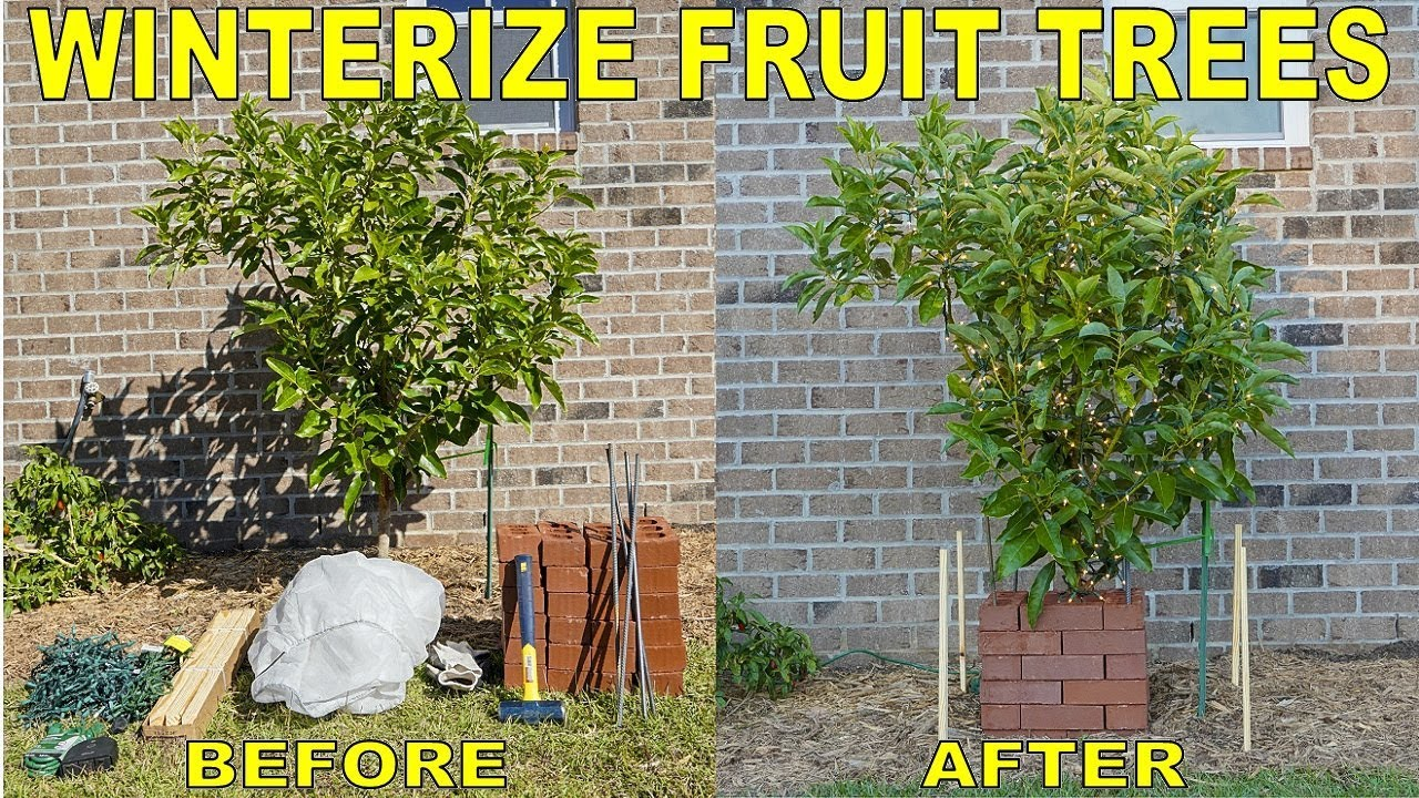 Protect Fruit Trees From Frost And