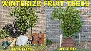 Protect Fruit Trees From Frost And Freeze - Winterizing Fruit Trees