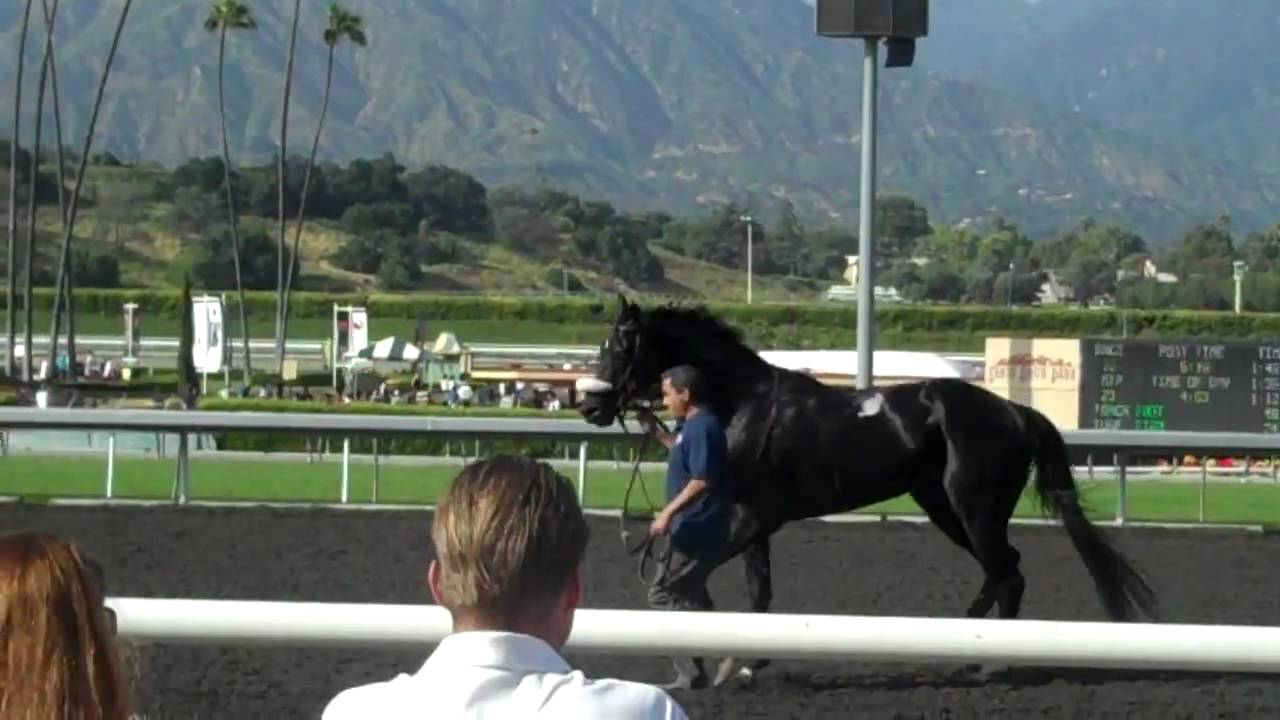 Mr Hot Stuff At Santa Anita Youtube