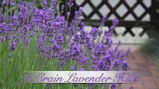 "Lavendula - Brian Crain ""Lavender Hills"""