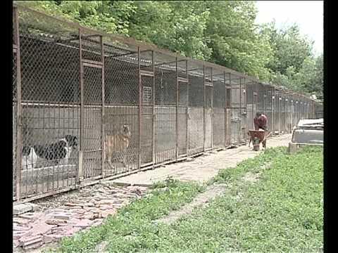 Тверской приют для собак в Больших Перемерках