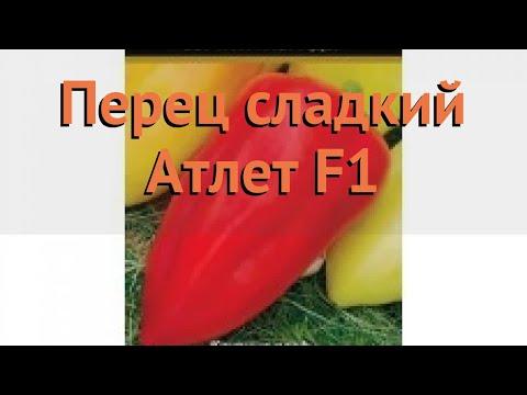 Перец сладкий Атлет F1 (atlet f1 atlet f1) 🌿 перец Атлет F1 обзор: как сажать семена перца Атлет F1