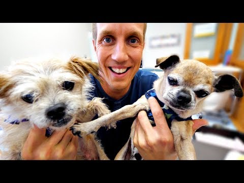 Senior Dogs Rescued from California Fires! Amazing Story