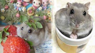 ПРИКОЛЫ С ЖИВОТНЫМИ-Смешной Хомяк Сема-ХОМКИ - (СМЕШНАЯ ОЗВУЧКА) - Hamsters like #310