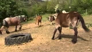 SOS Cheval recueille de plus en plus d'animaux errants - France 3 Auvergne le 08-05-2014