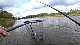 Не зря ждали осень Наконец то клюет Рыбалка на щуку на озере
