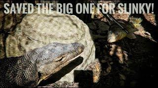 feeding-fresh-fish-to-all-my-lizards