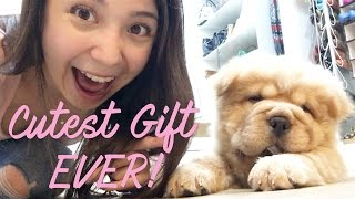 I GAVE MY SISTER A PUPPY!!