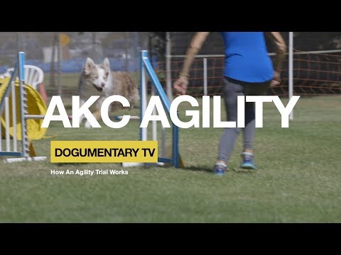 HOW AKC DOG AGILITY TRIAL WORKS