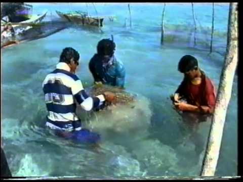 The return of giant clam - Samoa (TeleFood 1999)